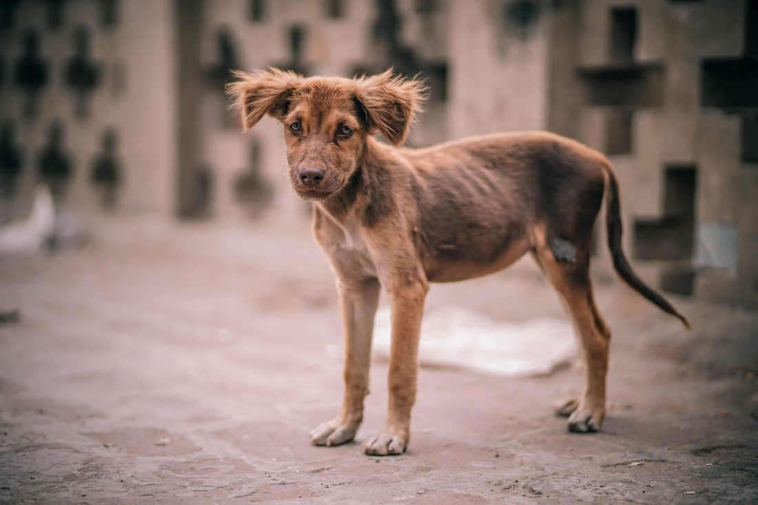 animal-brown-canine-304699